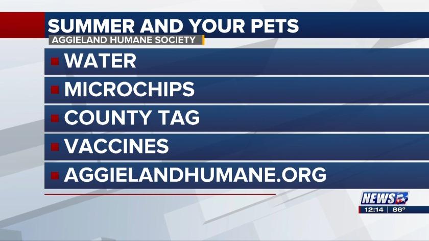 News 3 at Noon: Aggieland Humane Society