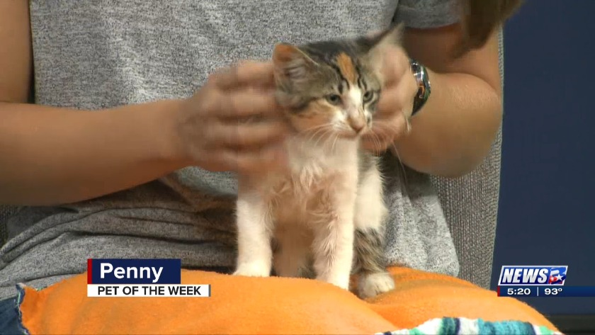Aggieland Humane Society Pet of the Week: Valentino