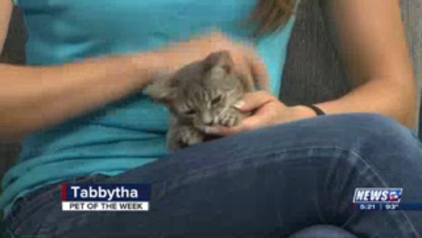 Aggieland Humane Society Pet of the Week: Tabbytha