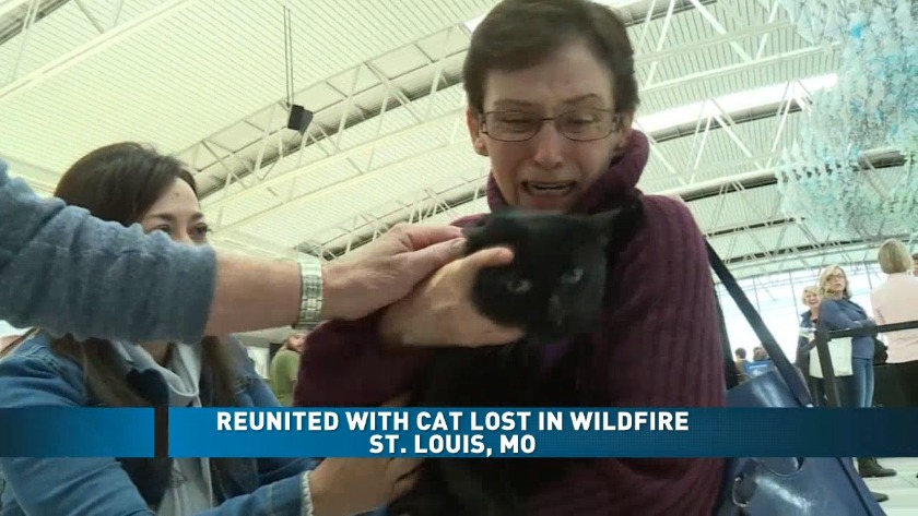 Cat Lost During California Wildfires Reunited With Family