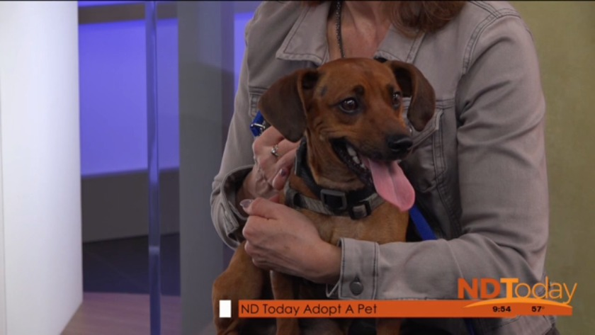 NDToday Adopt A Pet is Tigo