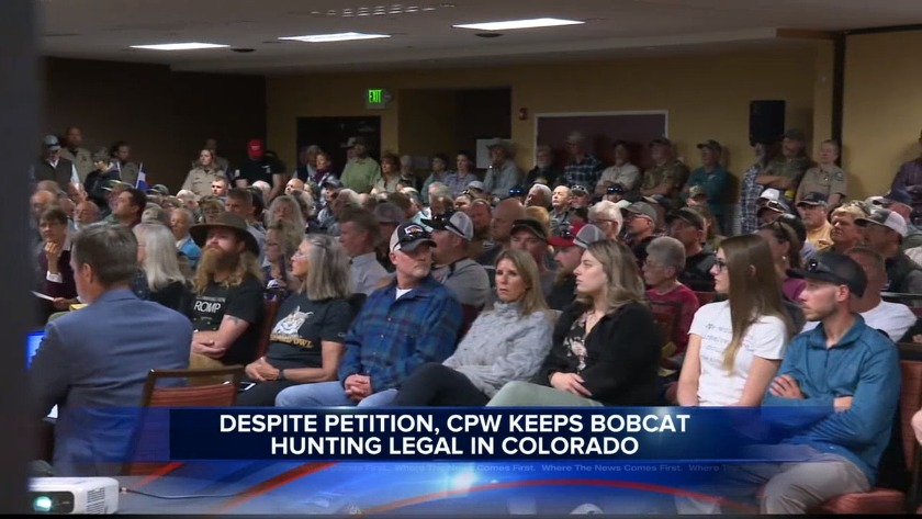 KJCT - Despite new petition, CPW keeps bobcat hunting legal