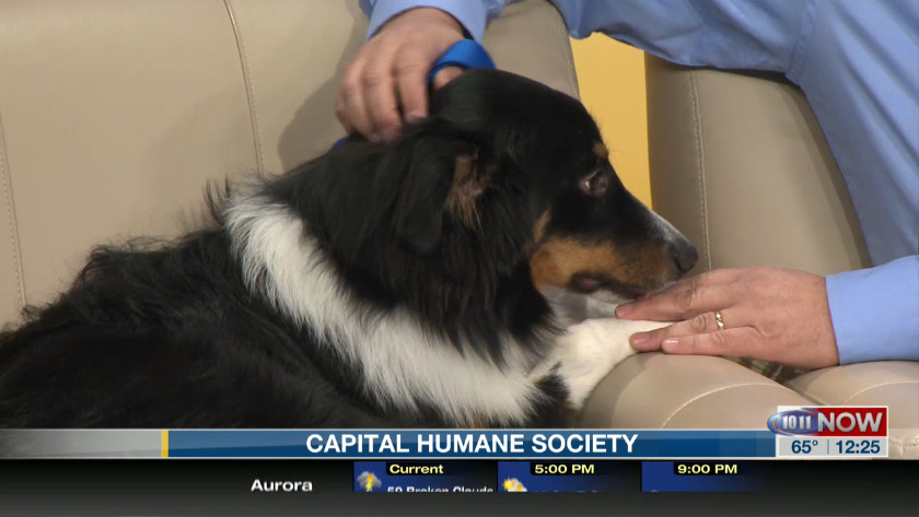 Meet Blue From The Capital Humane Society