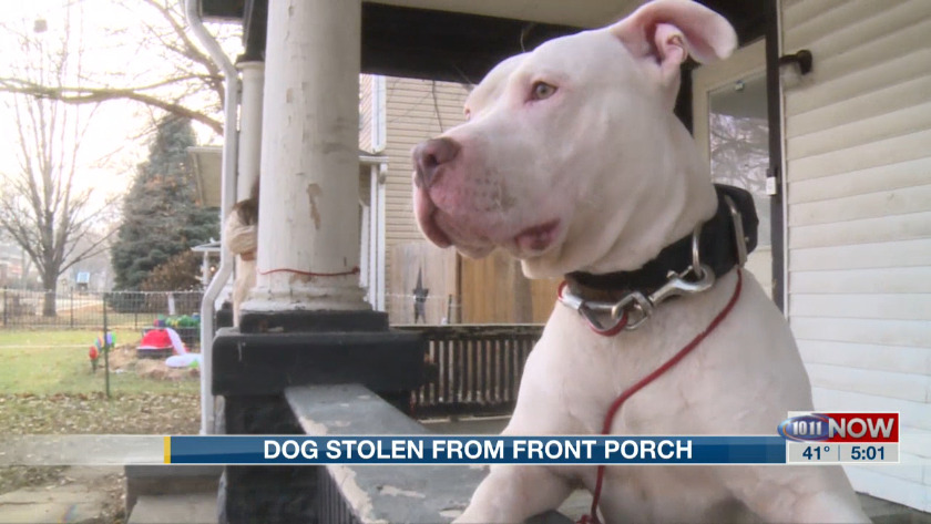 Lincoln Police Recover Stolen Dog With The Help Of Ring Doorbell