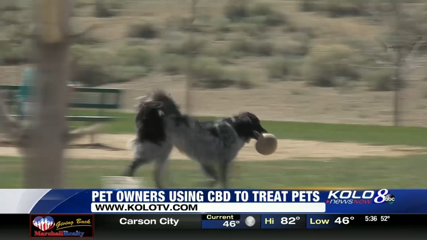 Pet owners turning to CBD to treat pets