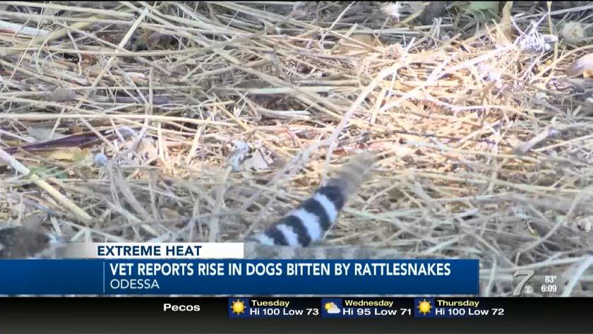 Rattlesnake Bites on the Rise