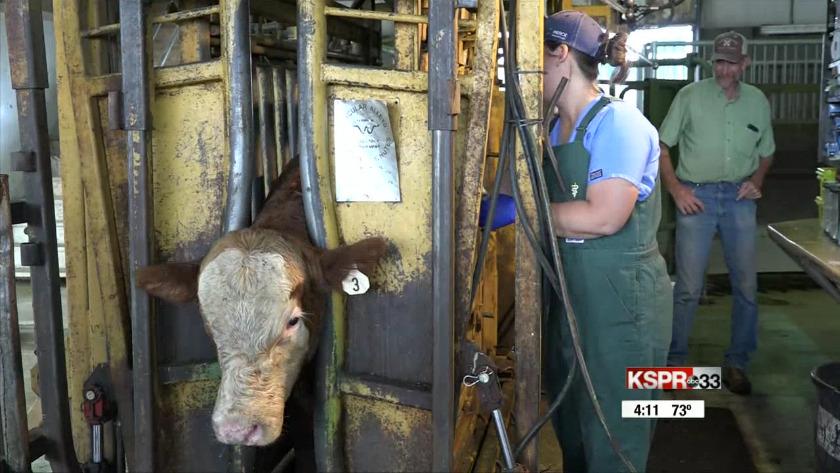 Ozarks sees shortage in large animal veterinarians