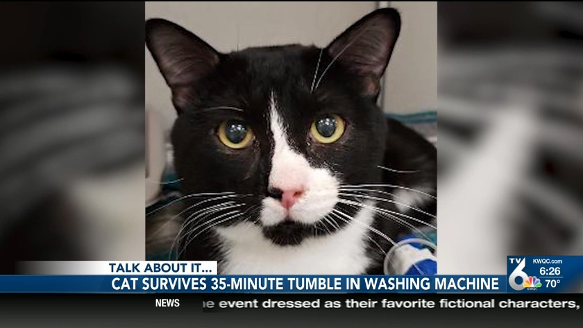 Cat survives entire wash cycle