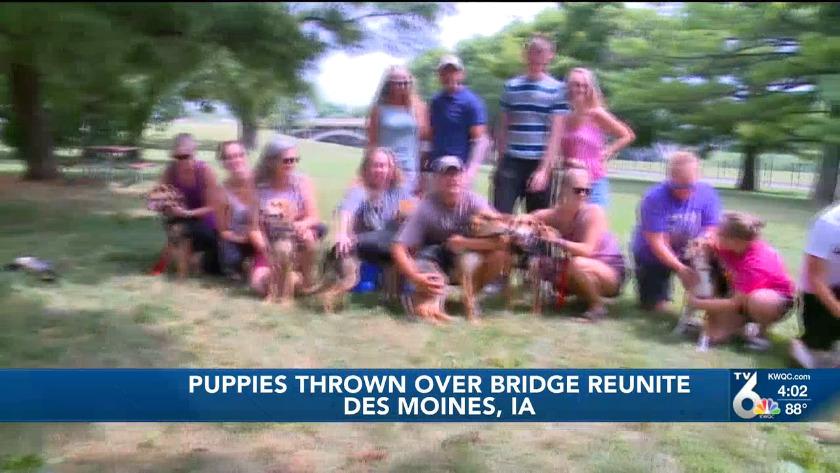 Iowa puppies thrown over bridge reunited