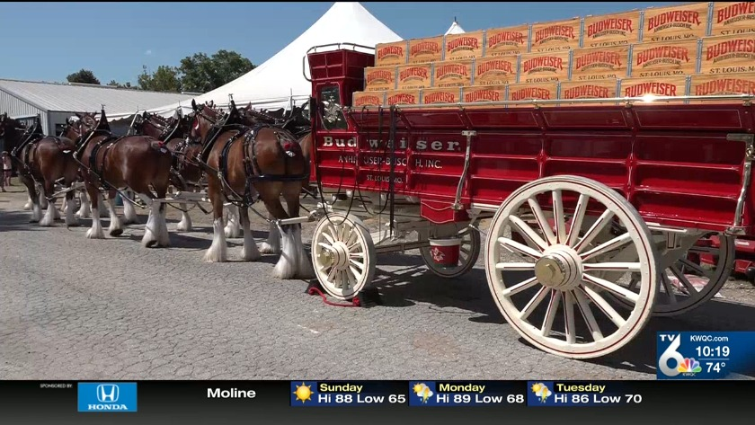Clinton County native's life on the road with the Budweiser Clydesdales