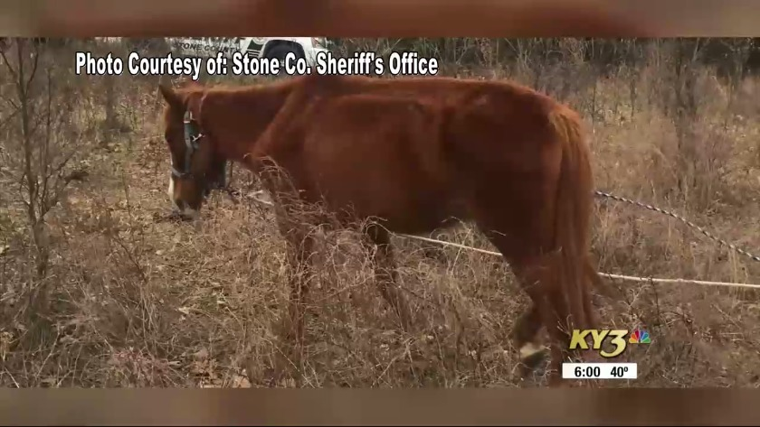 Stone County Sheriffs Office Investigates Deaths Of 2 Abandoned Horses