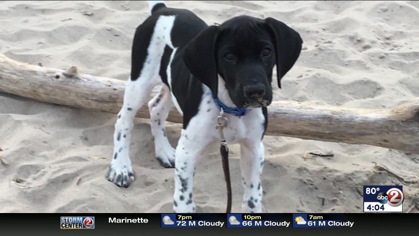 WATCH: Family warns about bow hunting after dog's death