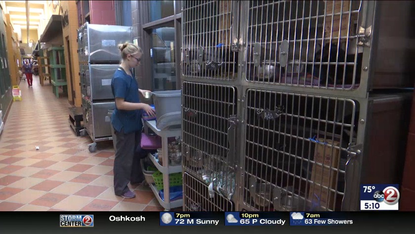 WATCH: Overcrowded animal shelter under new management
