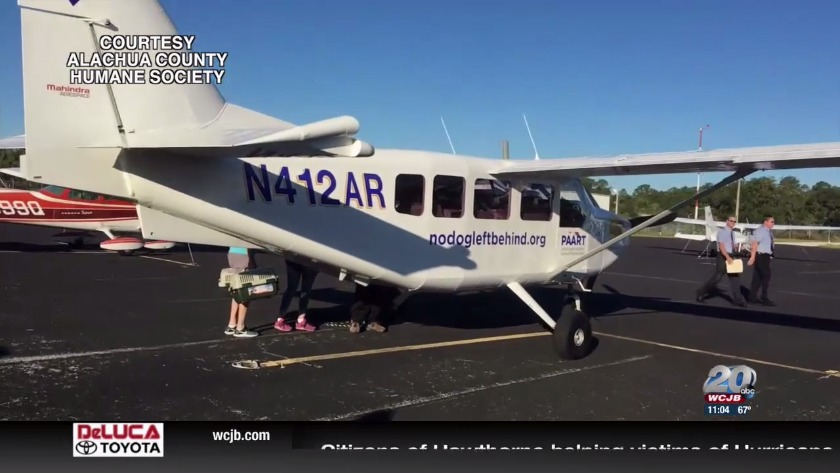 Alachua Humane Society flies out animals after Hurricane Michael