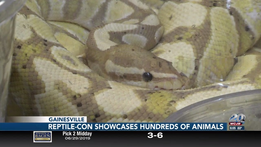 Reptile-con showcased hundreds of animals & why these