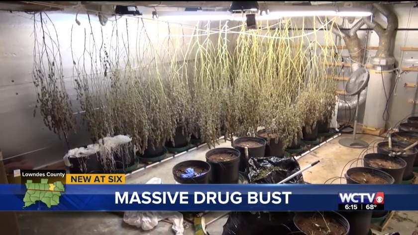 Half a million dollars in marijuana uncovered in Lowndes County