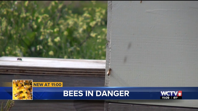 Honey bee population struggles to hang on
