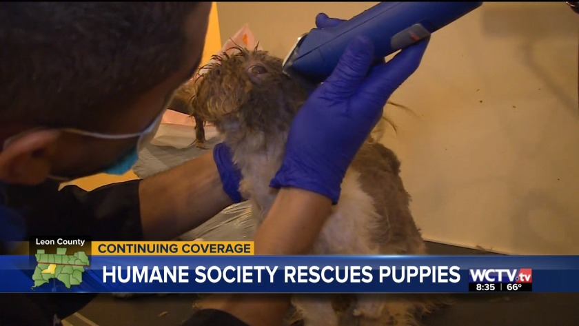 Dogs rescued from puppy mill up for adoption in Tallahassee this weekend