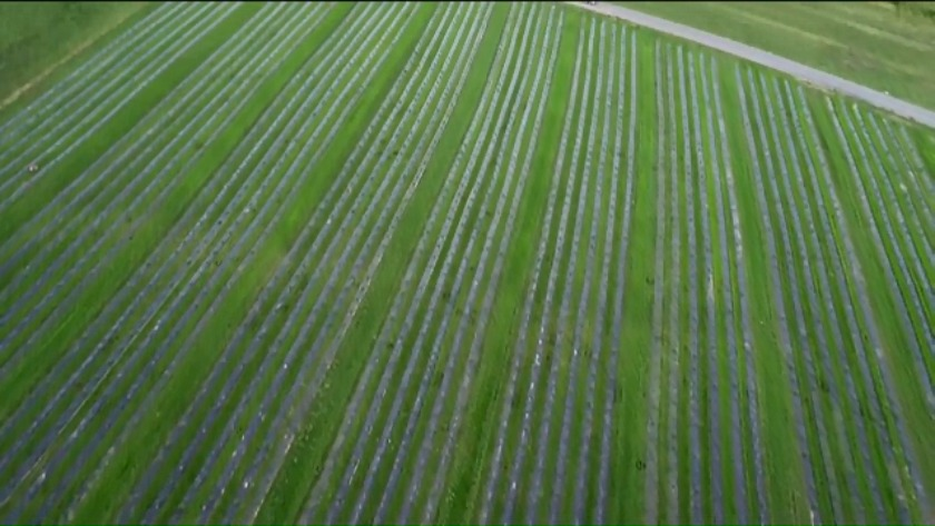 Christiansburg farm becomes largest producer of hemp in Virginia