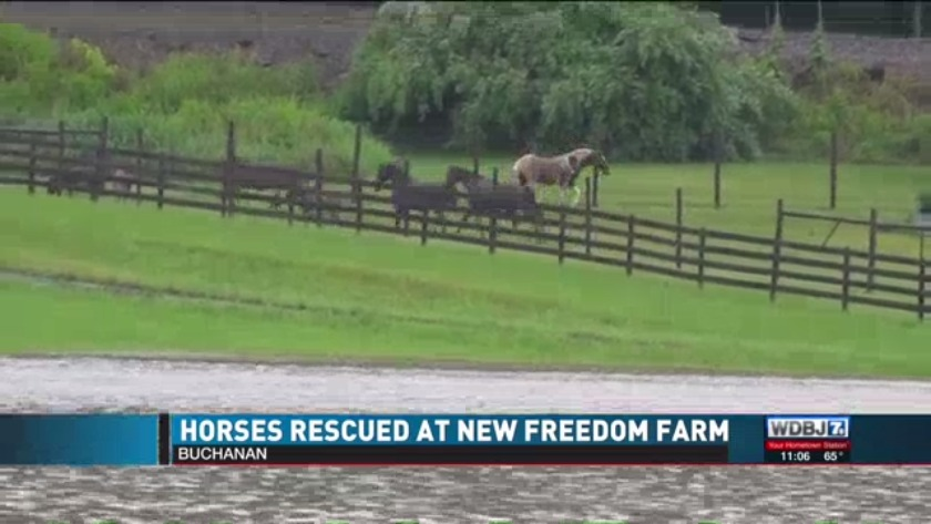 Horses Rescued At New Freedom Farm Due To Flooding