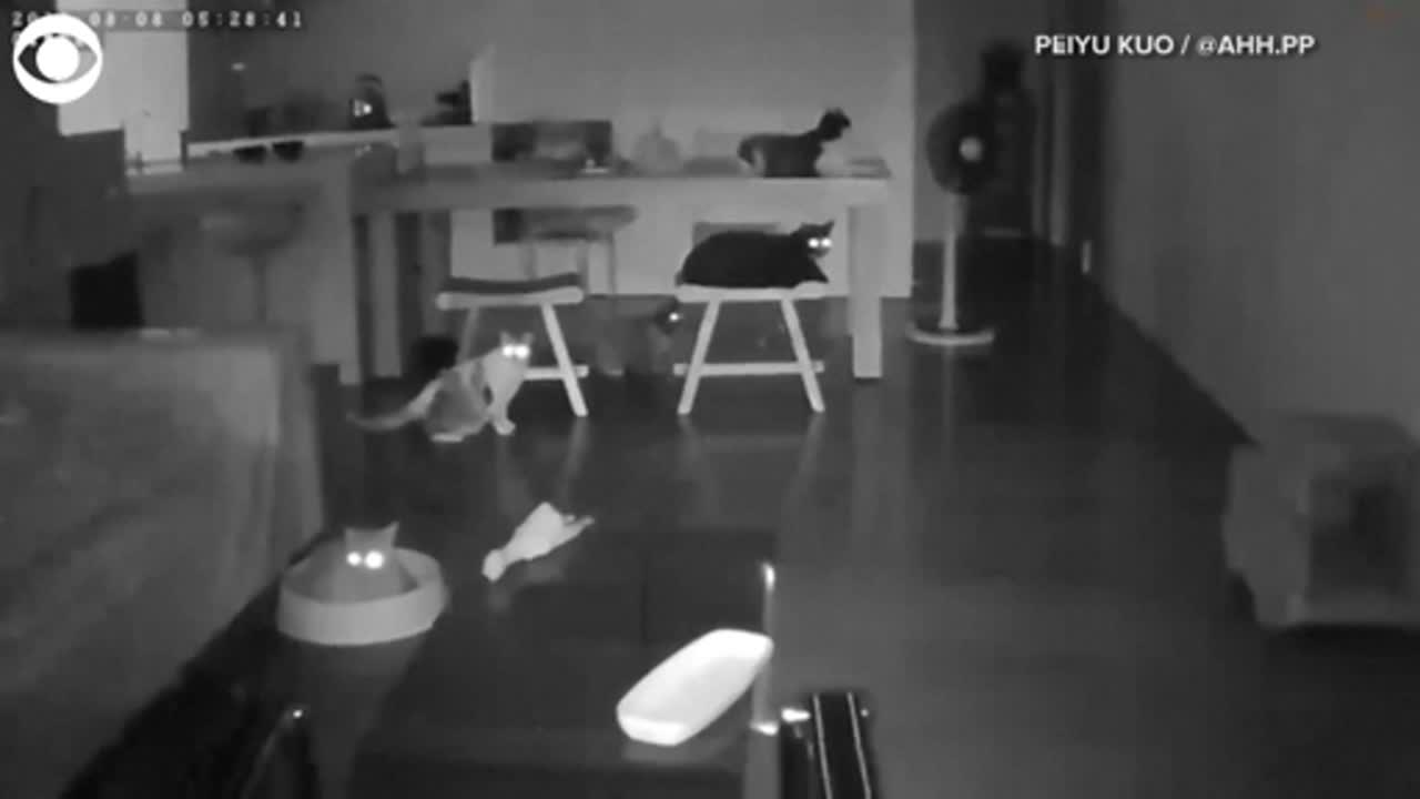 WATCH: Cats react to earthquake