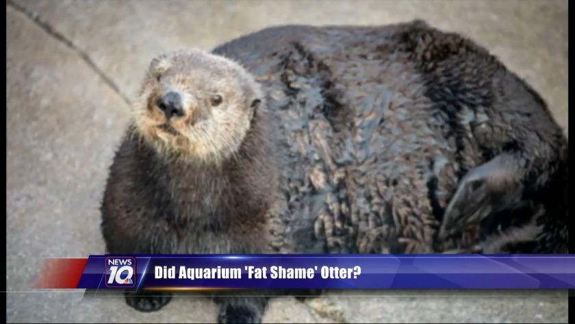 Did aquarium 'fat shame' otter?