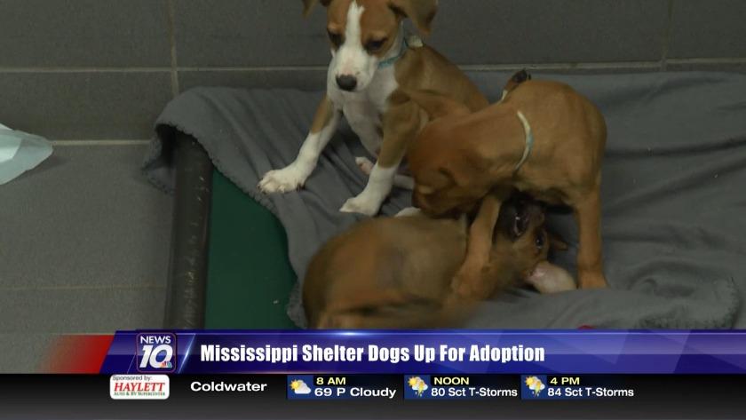 Mississippi Shelter Dogs Up For Adoption