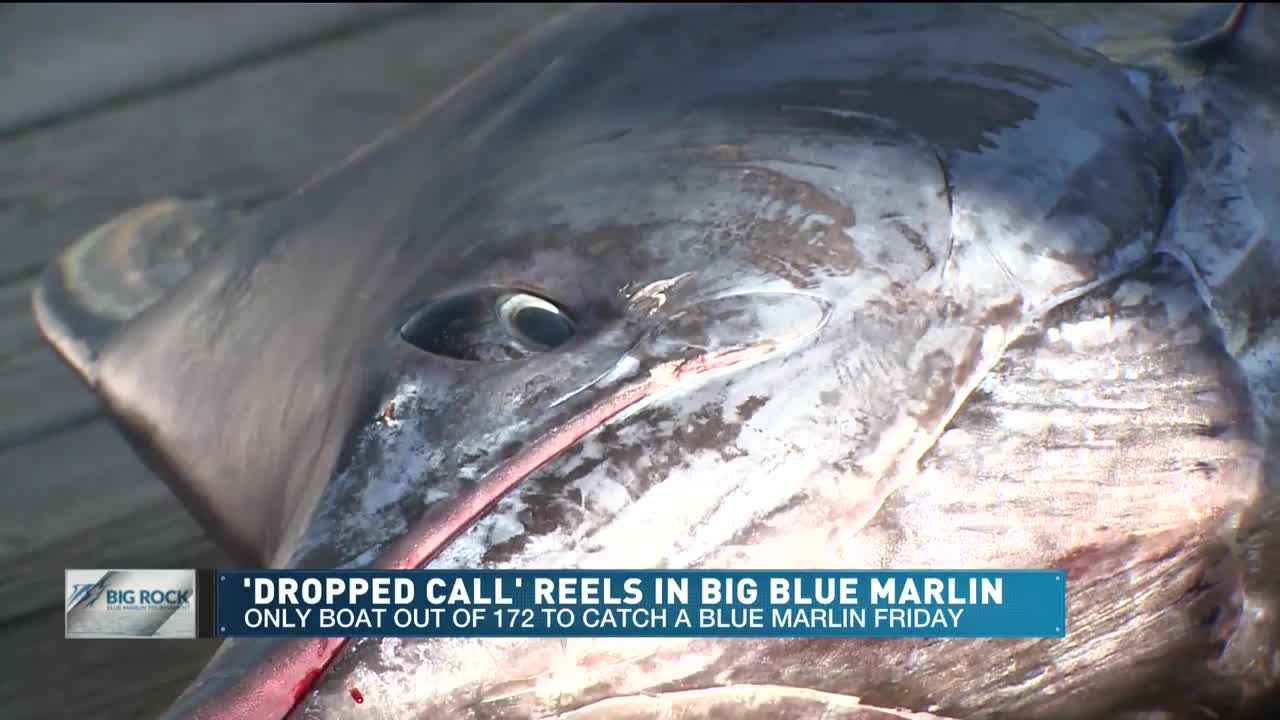 Top Dog' reels in historic 914-pound marlin at the 61st annual Big