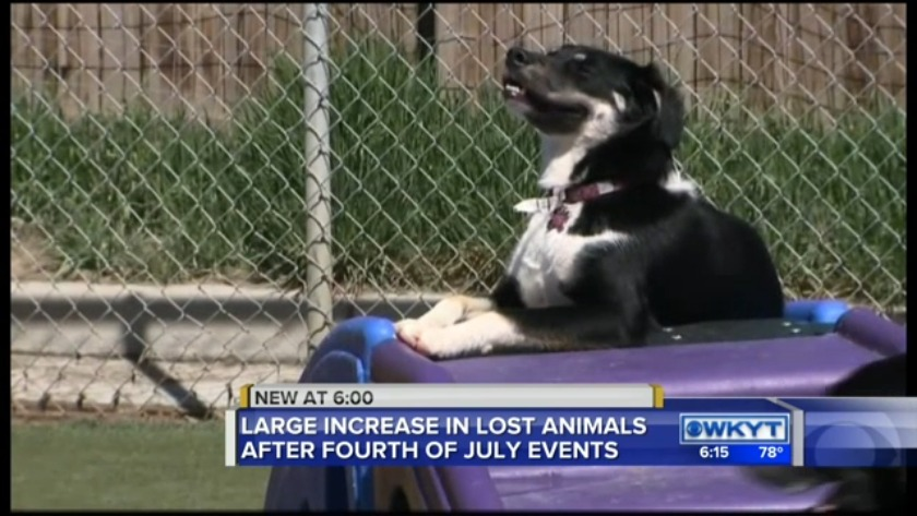 WATCH Lexington animal control sees surge of lost pets
