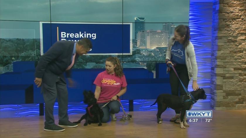 WATCH The Breakdown: Lexington Humane Society