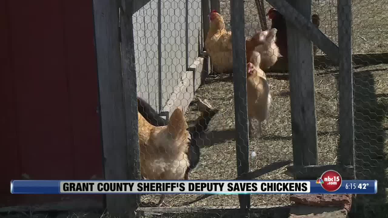 Grant County Sheriff's Deputy Saves Chickens
