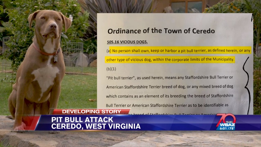 UPDATE | Owners charged after pit bull allegedly attacks
