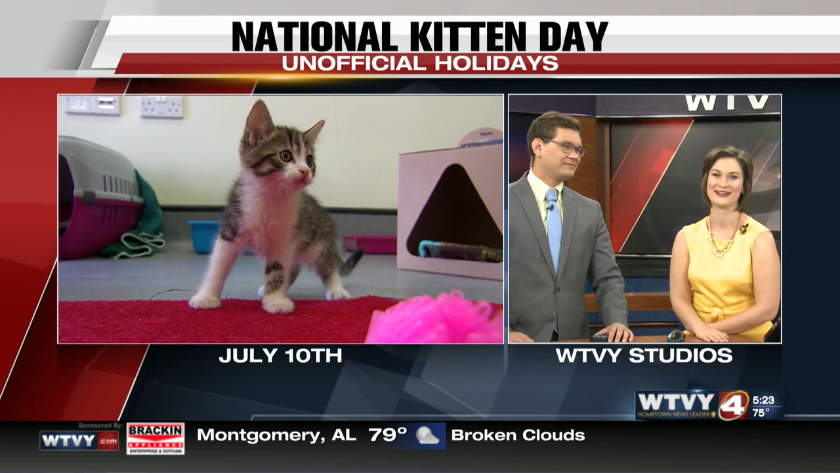Christmas In July Cat Meme.July 10th Is National Kitten Day