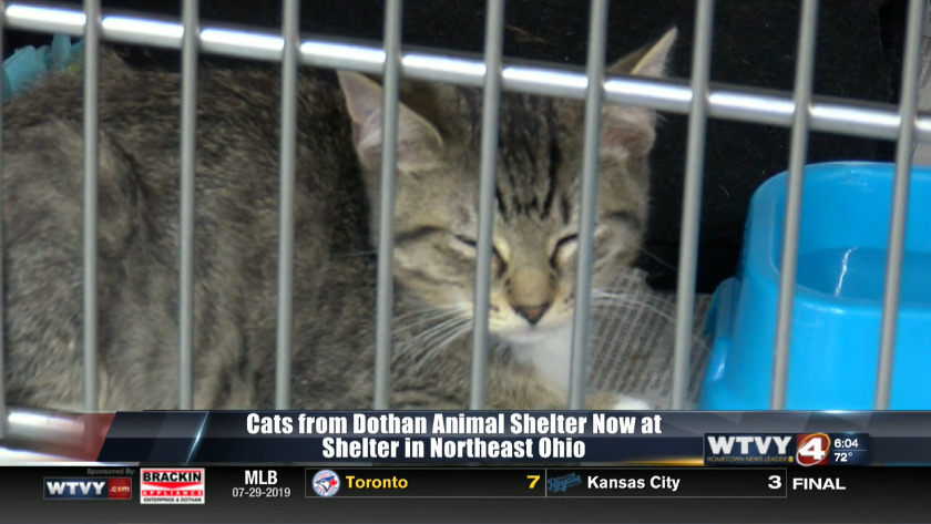 Alabama cats that escaped deadly dog attack head to Ohio