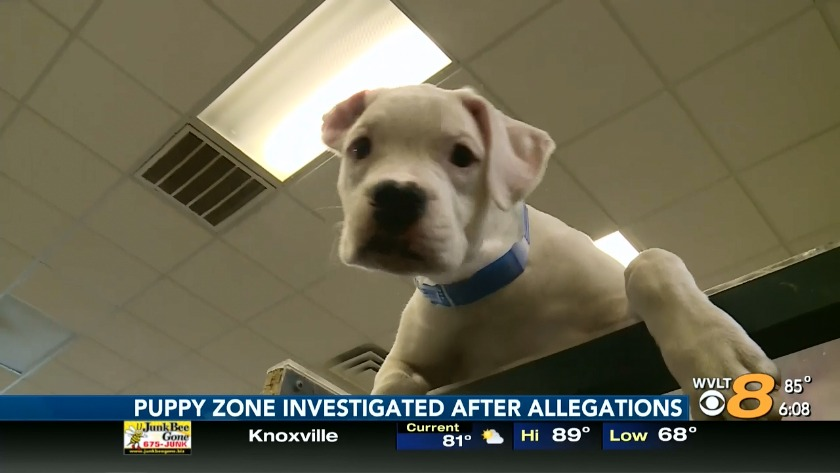 Puppy Zone passes state inspection, applies for license